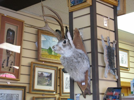 A mounted jackalope at the gift shop near Devils Tower.